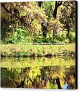 Reflective Live Oaks Canvas Print