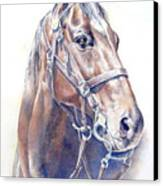 Regal  A Cavalry Horse Portrait Canvas Print