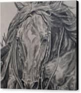 Reiner Canvas Print