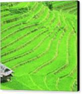 Rice Field Terraces Canvas Print