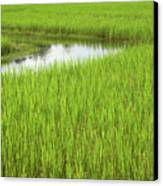 Rice Paddy Field In Siem Reap Cambodia Canvas Print by Julia Hiebaum