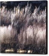 River Sage Canvas Print