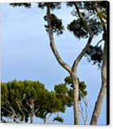Riviera Trees Canvas Print