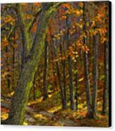 Road In The Woods Canvas Print