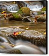 Roaring Fork Stream Great Smoky Mountains Canvas Print