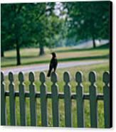 Robin On A Fence Canvas Print