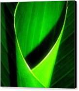 Rolled Canna Leaf Canvas Print by Beth Akerman