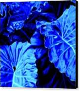 Romney Blue Canvas Print