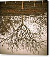 Roots Canvas Print by Derek Selander