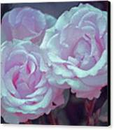 Rose 118 Canvas Print