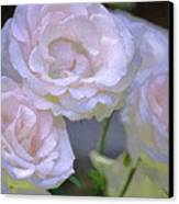 Rose 120 Canvas Print by Pamela Cooper