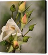 Rose And Buds Canvas Print by Atul Daimari