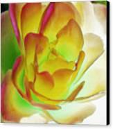 Rose Blush Canvas Print by Lynne Furrer