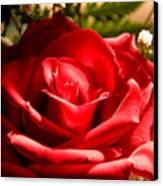 Rose For My Valentine Canvas Print by Thomas R Fletcher