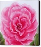 Rose Canvas Print by Joni McPherson