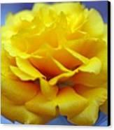 Rose Moss Flower Canvas Print