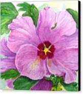 Rose Of Sharon Canvas Print