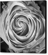 Rose Spiral Black And White Canvas Print by James BO  Insogna