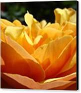 Rose Sunlit Orange Rose Garden 7 Rose Giclee Art Prints Baslee Troutman Canvas Print