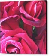 Roses Like Velvet Canvas Print by Dana Patterson