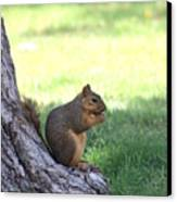 Roswell Squirrel Canvas Print