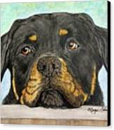 Rottweiler's Sweet Face 2 Canvas Print by Megan Cohen