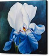 Royal Lilly Canvas Print