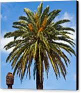 Royal Palm In Florida Canvas Print