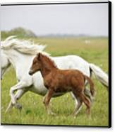 Running Horses.... Canvas Print by Gigja Einarsdottir
