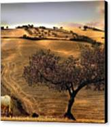 Rural Spain View Canvas Print