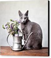 Russian Blue 02 Canvas Print by Nailia Schwarz