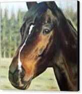 Russian Horse Canvas Print
