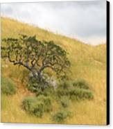 Sage Under Oak Canvas Print
