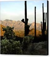Saguaro Silhouette Canvas Print