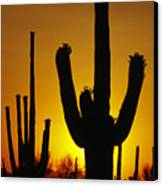 Saguaro Sunset Canvas Print by Sandra Bronstein