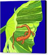 Salamander Canvas Print