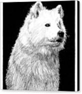 Samoyed Dog Canvas Print