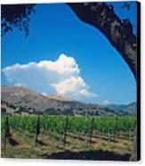 Santa Ynez Vineyard View Canvas Print by Kathy Yates