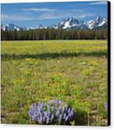 Sawtooths And Wildflowers Canvas Print