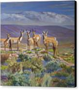 Say Cheese Antelope Canvas Print