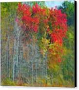 Scarlet Autumn Burst Canvas Print