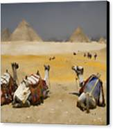 Scenic View Of The Giza Pyramids With Sitting Camels Canvas Print