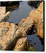 Scoodic Tidepool Canvas Print