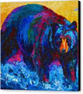 Scouting For Fish - Black Bear Canvas Print by Marion Rose