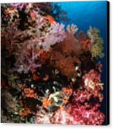 Sea Fans And Soft Coral, Fiji Canvas Print by Todd Winner