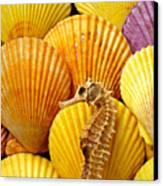 Sea Horse And Sea Shells Canvas Print