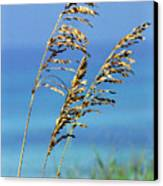 Sea Oats Gulf Of Mexico Canvas Print by Thomas R Fletcher