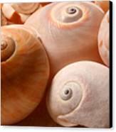 Sea Spirals Canvas Print by Barbara  White