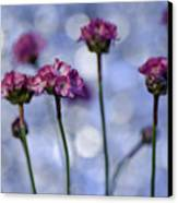 Sea Thrift Blossoms Canvas Print by Rod Sterling
