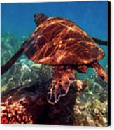 Sea Turtle On The Reef Canvas Print by Bette Phelan